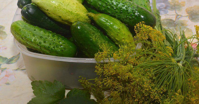 Солоні огірки як з бочки - рецепт приготування покроковий з фото